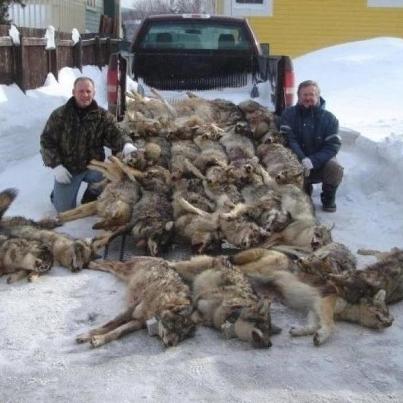 dead_wolves.jpg